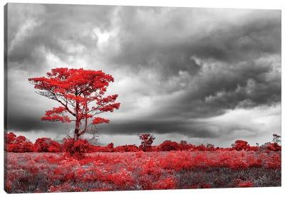 Red Tree - Sao Paulo, Brazil Canvas Art Print
