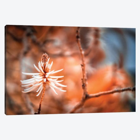 Rusty Flower - Miami, Florida Canvas Print #GLM137} by Glauco Meneghelli Canvas Art