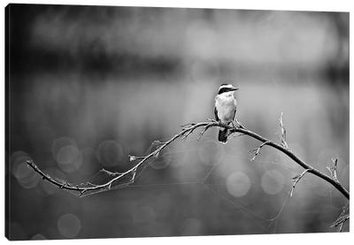 Black and White Bird Canvas Art Print
