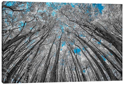 Up View Canvas Art Print