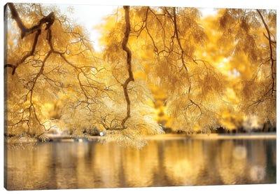 Yellow Leaves - Sao Paulo, Brazil Canvas Art Print