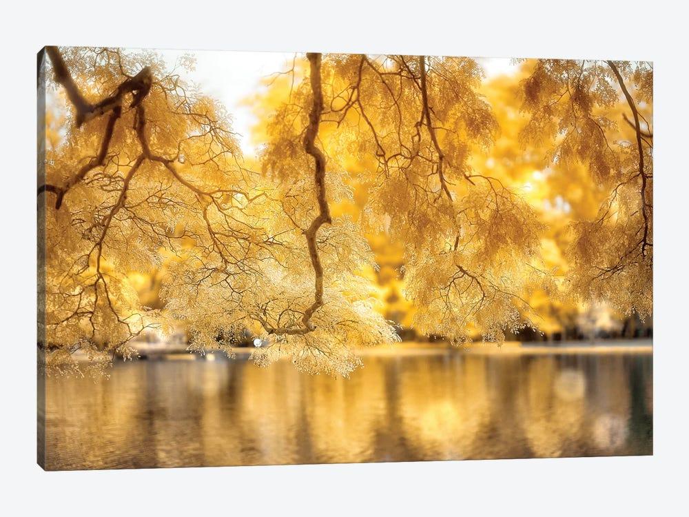 Yellow Leaves - Sao Paulo, Brazil by Glauco Meneghelli 1-piece Canvas Artwork