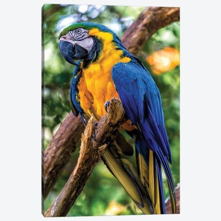 Blue Macaw 3-Piece Canvas #GLM15} by Glauco Meneghelli Canvas Artwork