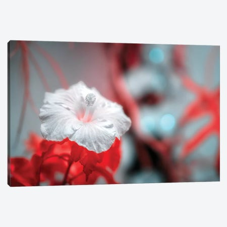 Flower Canvas Print #GLM165} by Glauco Meneghelli Canvas Art Print