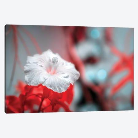 Flower Canvas Print #GLM165} by Glauco Meneghelli Canvas Art Print