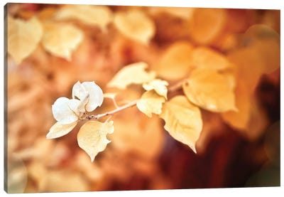 Gold Flower Canvas Art Print
