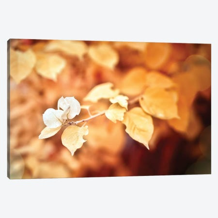 Gold Flower 3-Piece Canvas #GLM167} by Glauco Meneghelli Canvas Print