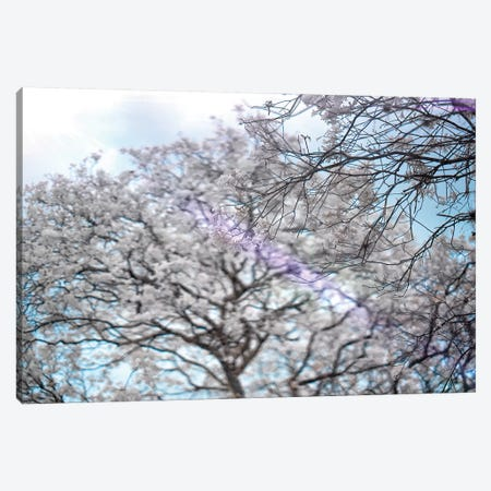 Trees Canvas Print #GLM169} by Glauco Meneghelli Canvas Artwork