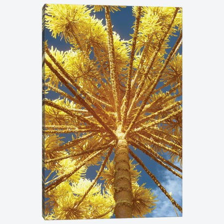 Up Yellow Canvas Print #GLM172} by Glauco Meneghelli Canvas Print