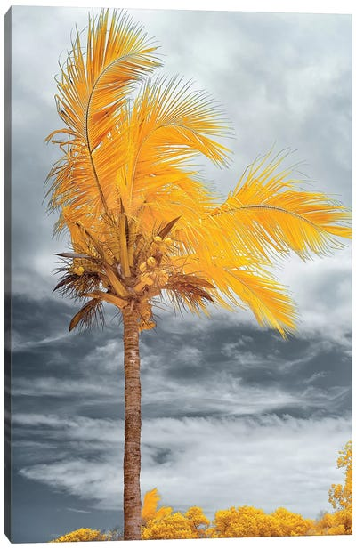 Coconut - Bahia, Brazil Canvas Art Print