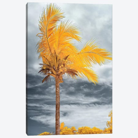 Coconut - Bahia, Brazil Canvas Print #GLM25} by Glauco Meneghelli Canvas Art Print