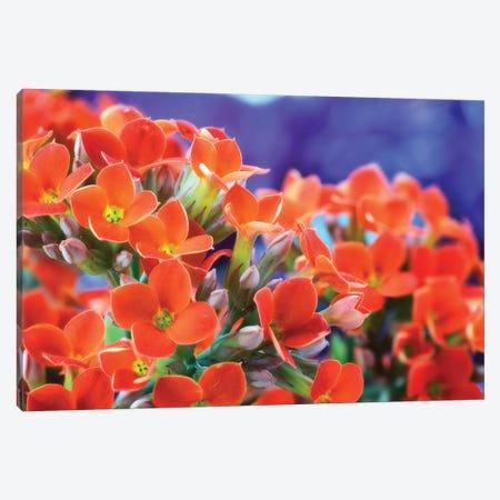 Flowers Canvas Print #GLM280} by Glauco Meneghelli Art Print