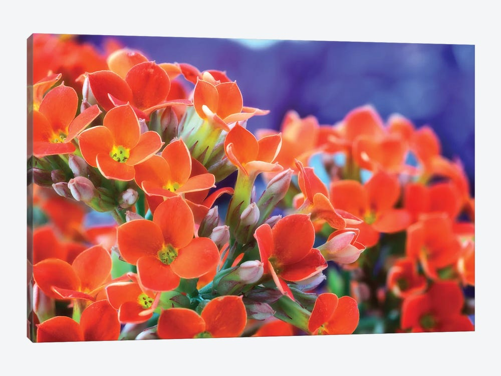 Flowers by Glauco Meneghelli 1-piece Canvas Wall Art