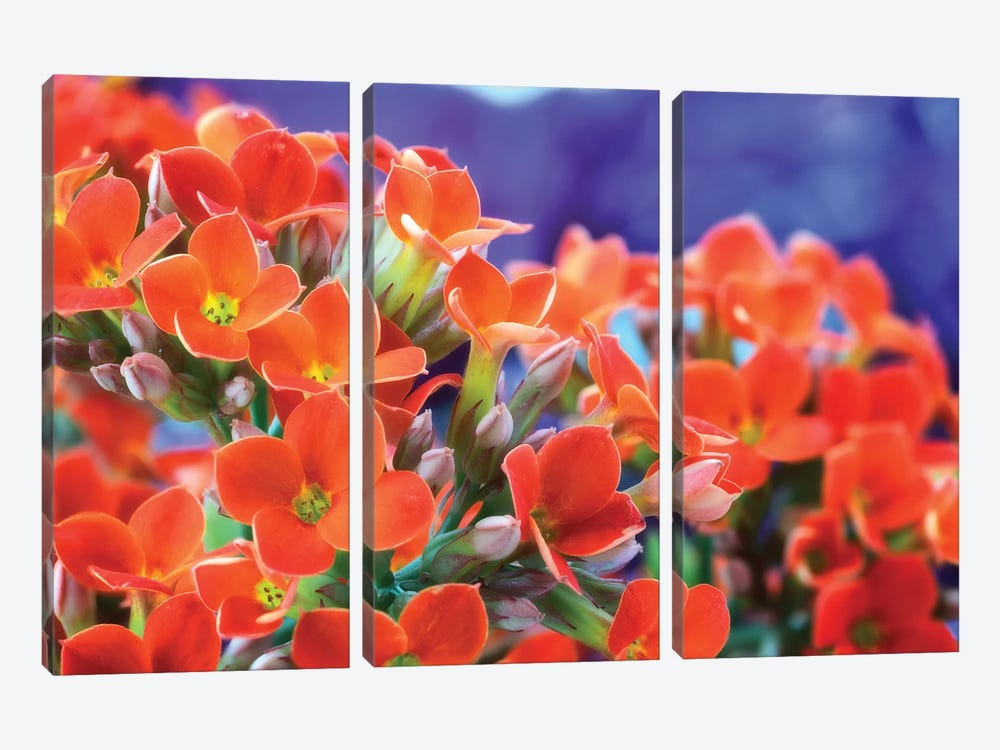 Flowers by Glauco Meneghelli 3-piece Canvas Wall Art