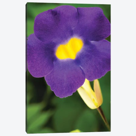 Purple And Yellow Flower Canvas Print #GLM286} by Glauco Meneghelli Canvas Artwork
