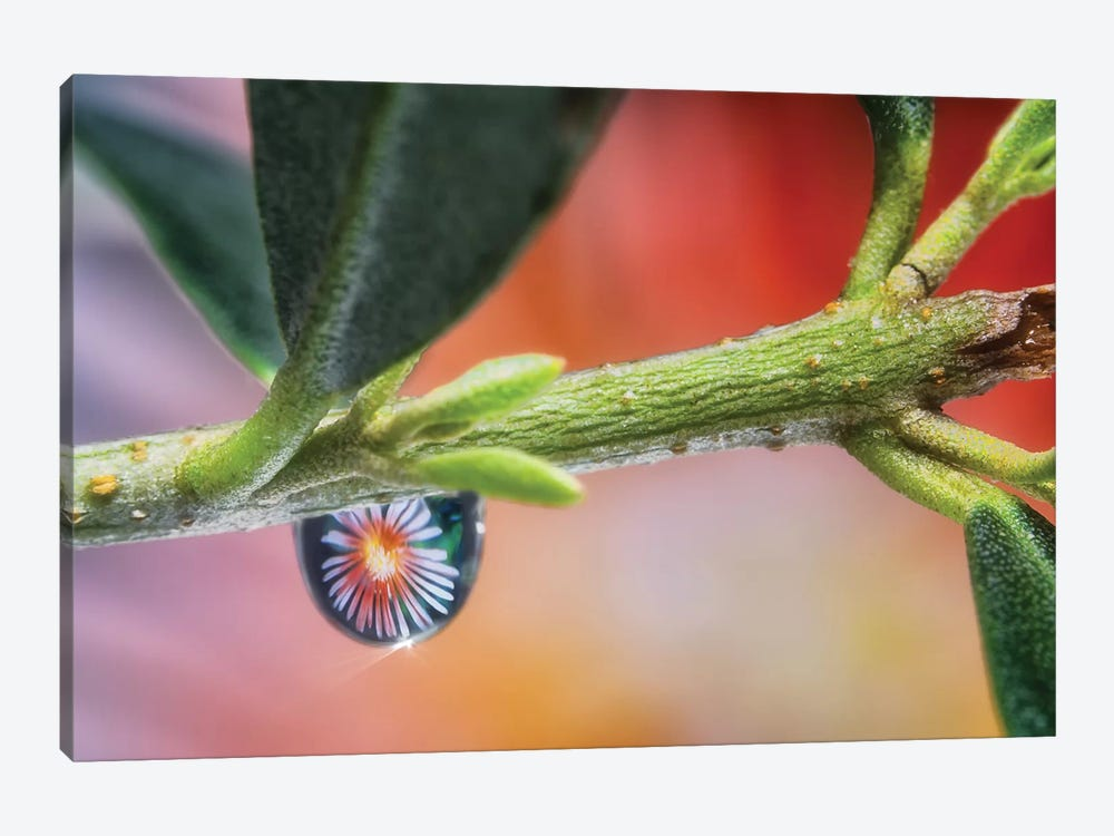 Waterdrop Macro On Leaf by Glauco Meneghelli 1-piece Canvas Wall Art