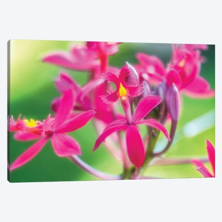 Pink Orchid Flower 3-Piece Canvas #GLM294} by Glauco Meneghelli Canvas Print