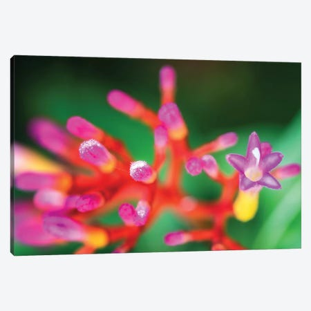 Close Up Of Pink Flower Canvas Print #GLM301} by Glauco Meneghelli Canvas Artwork