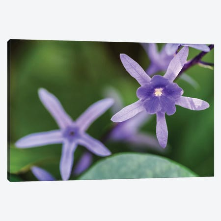 Purple Flower Of A Flower Canvas Print #GLM303} by Glauco Meneghelli Canvas Artwork