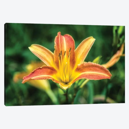Orange Lily In The Garden Canvas Print #GLM304} by Glauco Meneghelli Canvas Print