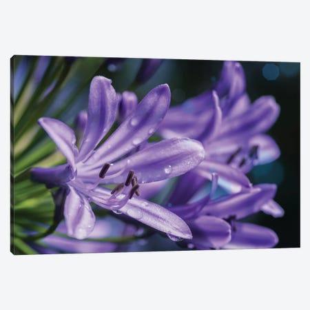 Lilium Flower Canvas Print #GLM312} by Glauco Meneghelli Canvas Art Print