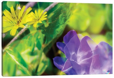 Blue And Yellow Flower Dd Canvas Art Print