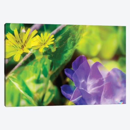 Blue And Yellow Flower Dd Canvas Print #GLM314} by Glauco Meneghelli Canvas Artwork