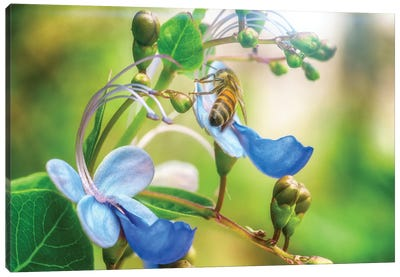 Bee Flower Canvas Art Print