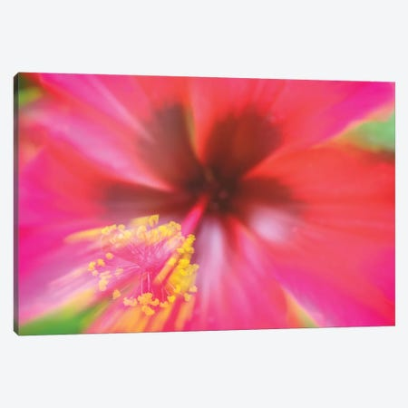 Pink Hibiscus Flower Canvas Print #GLM318} by Glauco Meneghelli Canvas Print