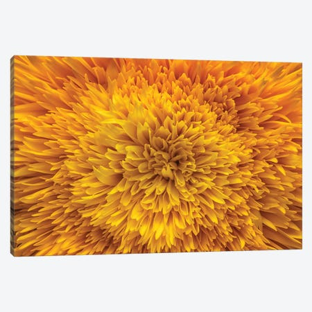 Exotic Sunflower Canvas Print #GLM326} by Glauco Meneghelli Art Print