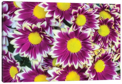 Colorful Flower Background Canvas Art Print