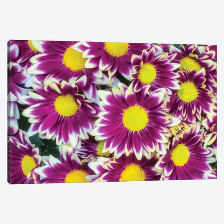 Colorful Flower Background Canvas Print #GLM327} by Glauco Meneghelli Canvas Art Print