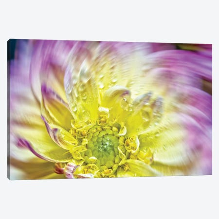 Spin Up Of A Yellow Dahlia Canvas Print #GLM328} by Glauco Meneghelli Canvas Artwork
