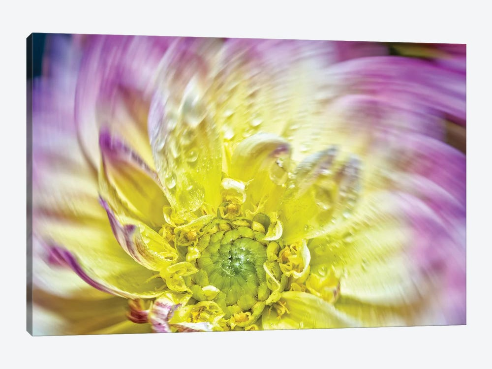 Spin Up Of A Yellow Dahlia by Glauco Meneghelli 1-piece Canvas Print