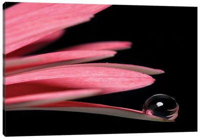Droplet Macro Shot Of A Pink Flower Canvas Art Print
