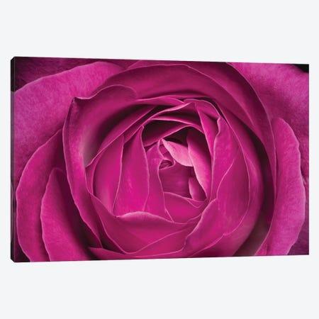 Rose Canvas Print #GLM344} by Glauco Meneghelli Canvas Print
