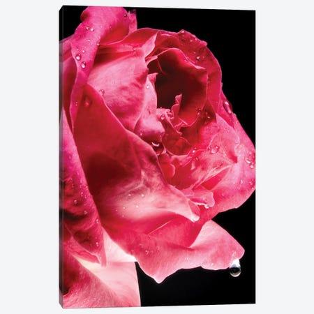 Red Rose Flower Canvas Print #GLM346} by Glauco Meneghelli Art Print
