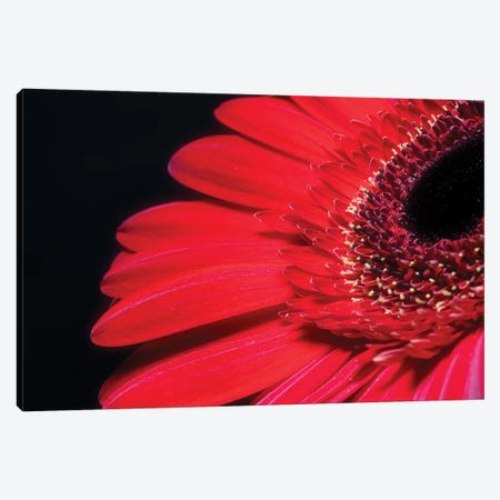 Red Gerbera Flower Canvas Print #GLM348} by Glauco Meneghelli Canvas Wall Art