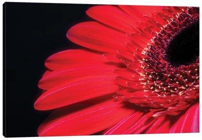 Red Gerbera Flower Canvas Art Print