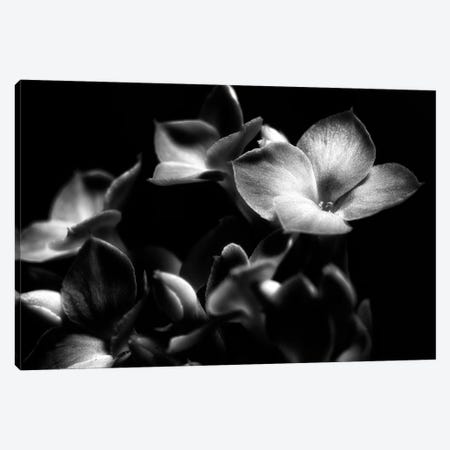 Black And White Orchid 3-Piece Canvas #GLM351} by Glauco Meneghelli Canvas Art Print