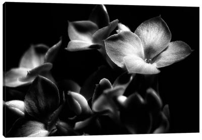 Black And White Orchid Canvas Art Print