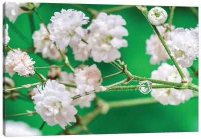 Cherry Tree Blossom Canvas Art Print