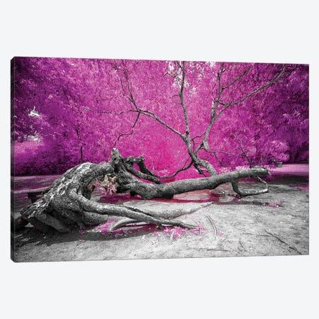 Dry Oak - Bahia, Brazil Canvas Print #GLM38} by Glauco Meneghelli Canvas Art Print