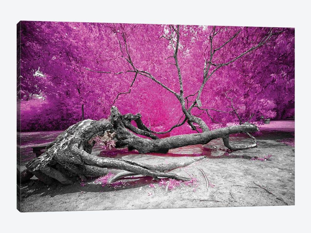 Dry Oak - Bahia, Brazil by Glauco Meneghelli 1-piece Canvas Art