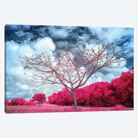 Dry Tree Magenta - Sao Paulo, Brazil Canvas Print #GLM39} by Glauco Meneghelli Art Print