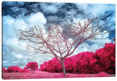 Dry Tree Magenta - Sao Paulo, Brazil Canvas Art Print