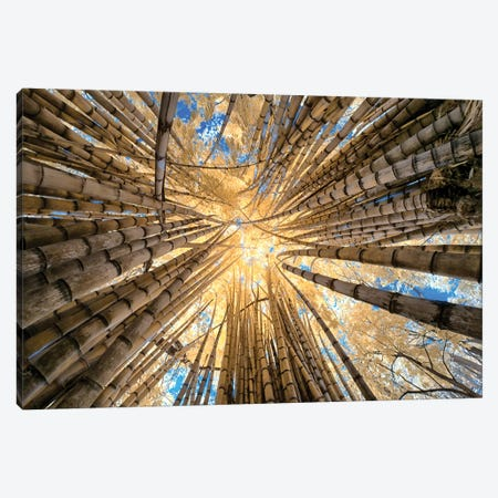 Bamboo Canvas Print #GLM3} by Glauco Meneghelli Canvas Print