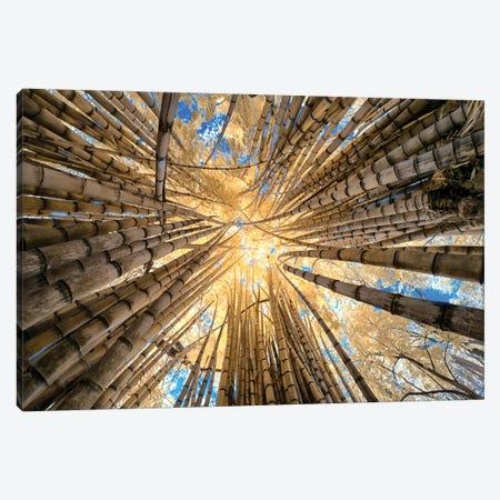Bamboo Canvas Print #GLM3} by Glauco Meneghelli Canvas Print
