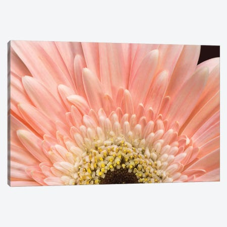 Flower I Canvas Print #GLM42} by Glauco Meneghelli Canvas Artwork