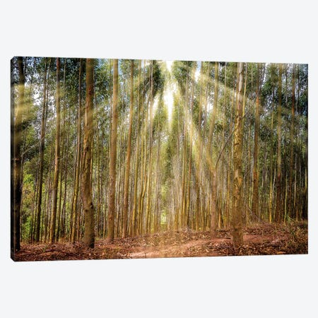 Landscape17 Canvas Print #GLM444} by Glauco Meneghelli Canvas Wall Art